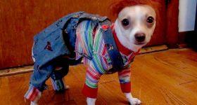Собаки в образе героев фильмов ужасов