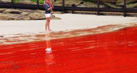 Океан кроваво-красного цвета