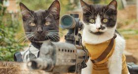 Котики спасают мир от зомби