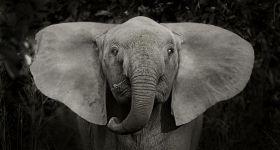 Не пристегнутый пассажир – слон!