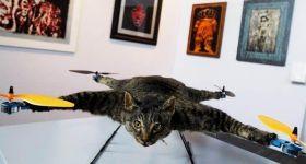 Радиоуправляемый кот