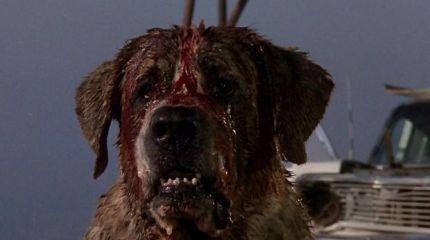 Возвращение бешенного пса Куджо